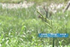 2014解放节油挑战赛 河南洛阳用户测试视频-柳成刚