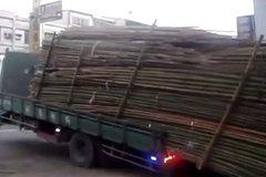 真是涨姿势了 原来运竹子的都这么卸货