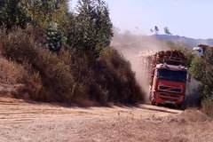 沃尔沃木材运输车太强了,拉这些不费力,快来感受下