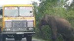 大象试图对来往车辆发动攻击,不敢碰货车却敢欺负摩托