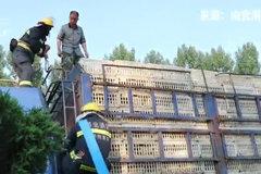天气炎热活禽运输有困难?消防员高压水枪喷水帮助降温