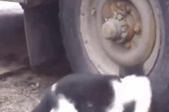 轮胎里的猫捉老鼠大片 老鼠都吓瘫了