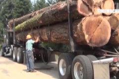 谁说国外没超载?这木头摞得这么高算谁的?